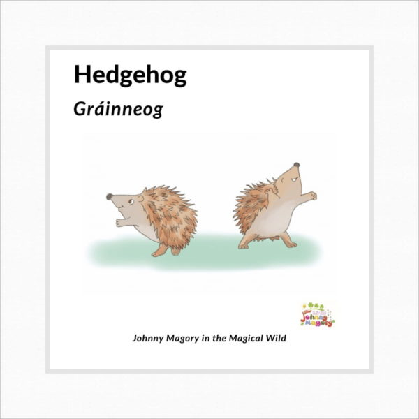 Johnny Magory Hedgehog