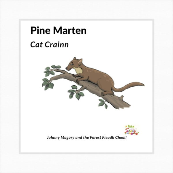 Johnny Magory Pine Marten