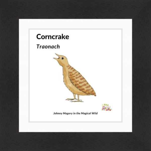 Johnny Magory Corncrake Black