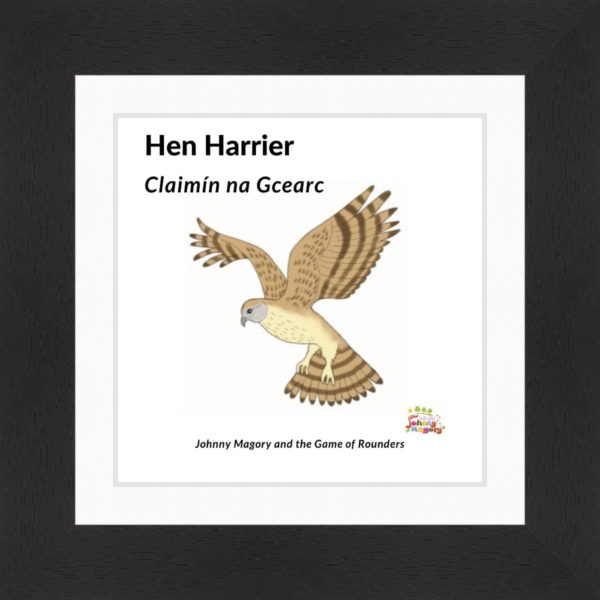 Johnny Magory Hen Harrier black