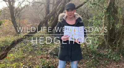 Wildlife Wednesdays Hedgehog Emma-Jane Leeson Johnny Magory