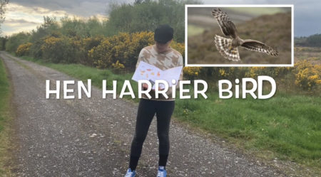 Johnny Magory Hen Harrier Emma-Jane Leeson Irish Wildlife