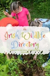 Irish Wildlife Directory For Kids